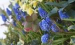 spring08-022